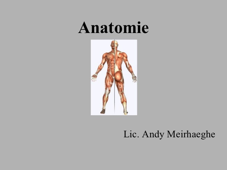 Anatomie Lic. Andy Meirhaeghe
