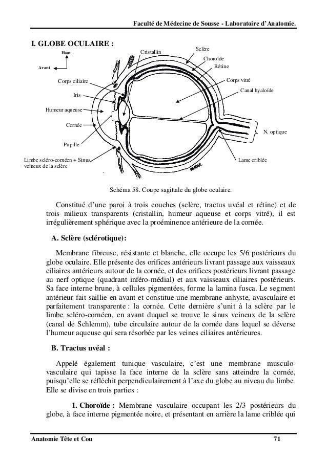 Anatomie tete et cou 2012 - Couche du globe oculaire ...