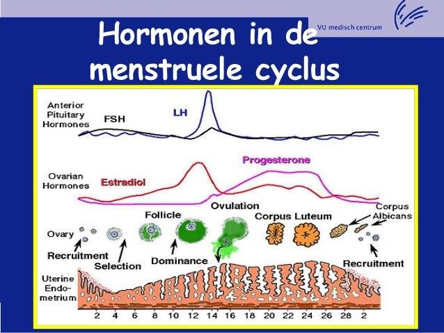 hormonale cyclus vrouw