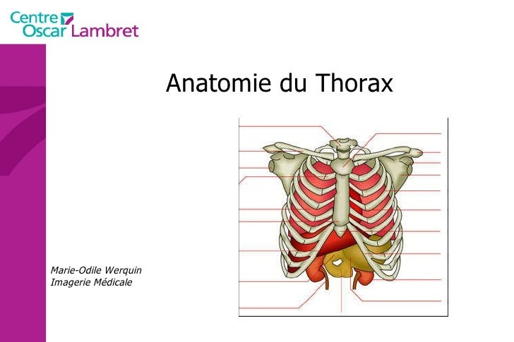 Anatomie du Thorax Marie-Odile Werquin Imagerie Médicale