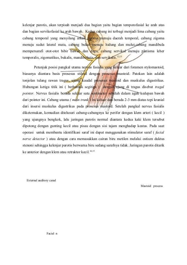 anatomi fisiologi kelenjar parotis