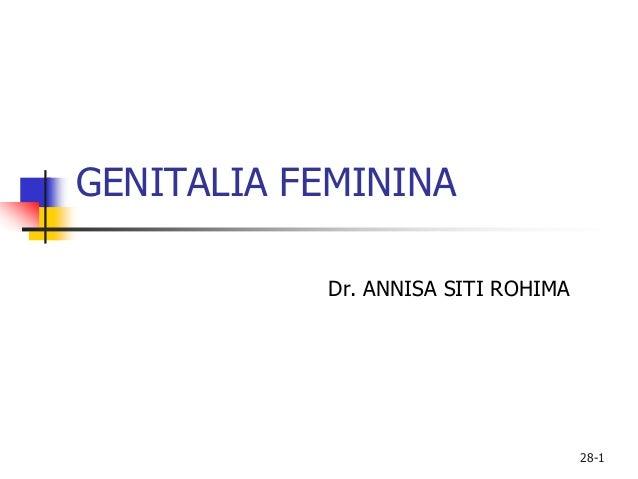 28-1 GENITALIA FEMININA Dr. ANNISA SITI ROHIMA