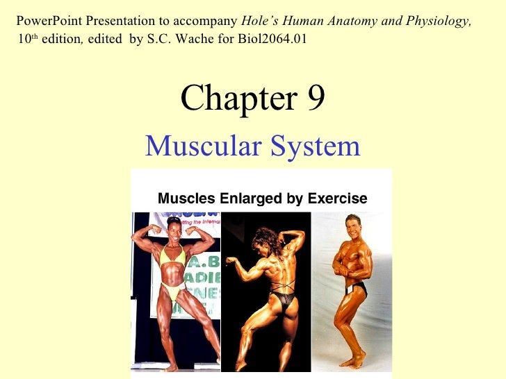 Chapter 9 Muscular System PowerPoint Presentation to accompany  Hole's Human Anatomy and Physiology,  10 th  edition ,  ed...