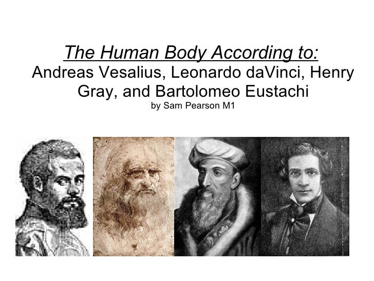 The Human Body According to:   Andreas Vesalius, Leonardo daVinci, Henry Gray, and Bartolomeo Eustachi by Sam Pearson M1