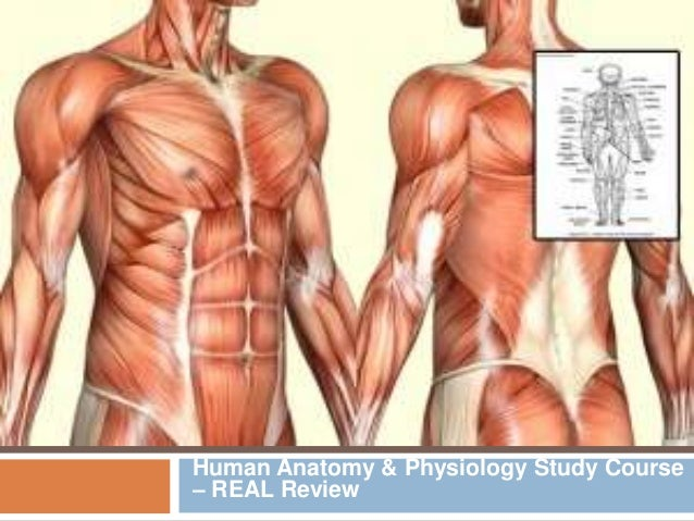 Human Anatomy & Physiology Study Course – REAL Review