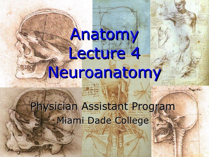 Anatomy Lecture 4 Neuroanatomy Physician Assistant Program Miami Dade College