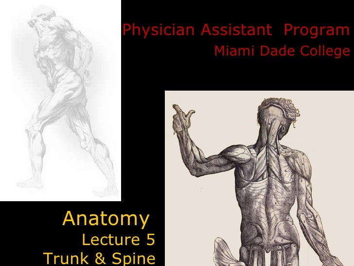 Anatomy   Lecture 5  Trunk & Spine Physician Assistant  Program Miami Dade College