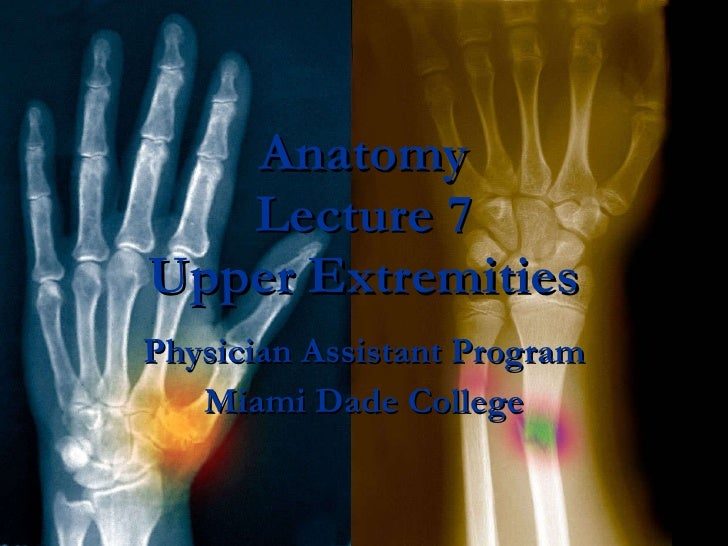 Anatomy Lecture 7 Upper Extremities Physician Assistant Program Miami Dade College