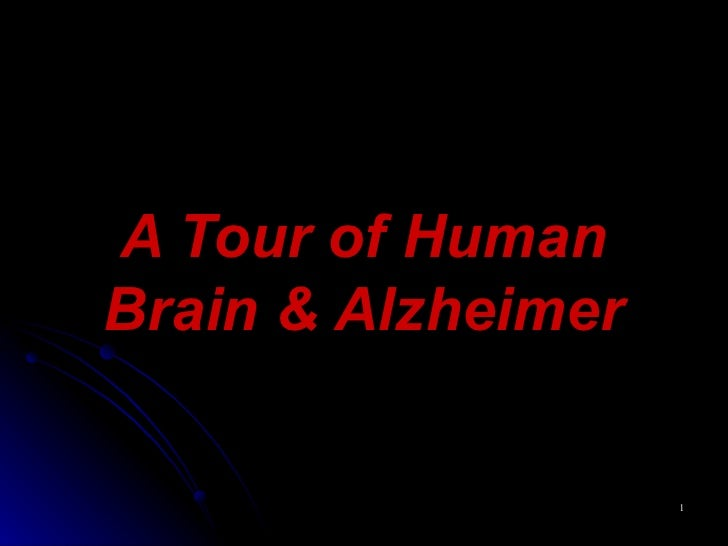 Anatomy Of Human Brain