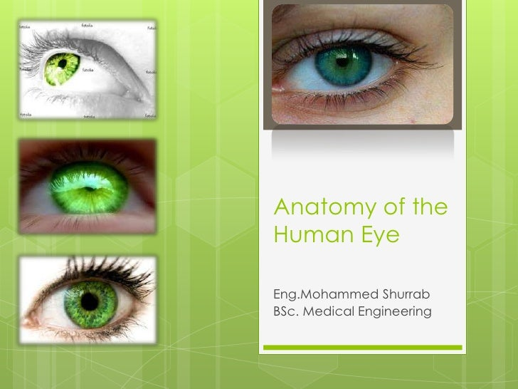 Anatomy of the Human Eye<br />Eng.MohammedShurrab<br />BSc. Medical Engineering<br />