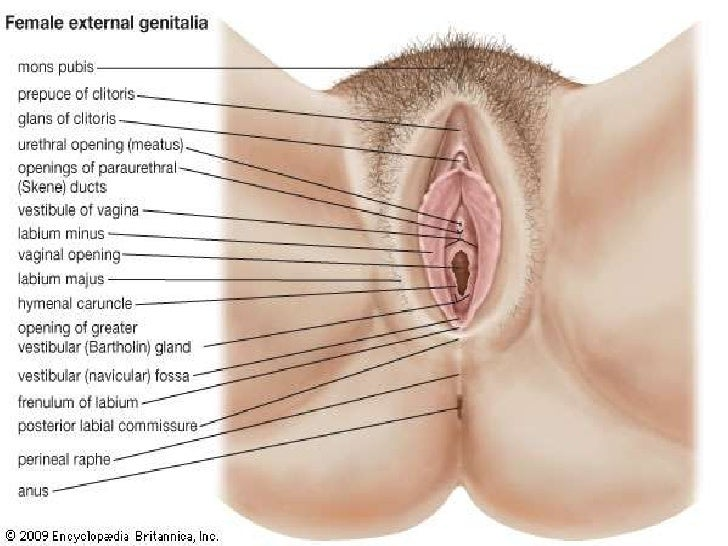 illustration of sexual intercourse
