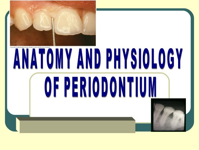 Periodontal TissuesTissues that surround      Tissues that support      the teeth                  the teeth              ...