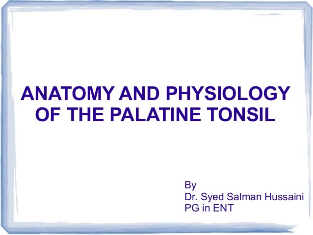 ANATOMY AND PHYSIOLOGY OF THE PALATINE TONSIL             By             Dr. Syed Salman Hussaini             PG in ENT