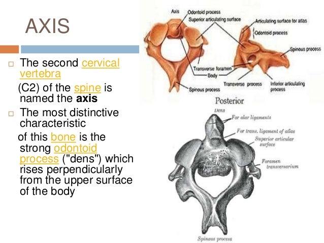Anatomy of cervical spine and nerves
