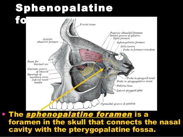 Pterygopalatine fossa