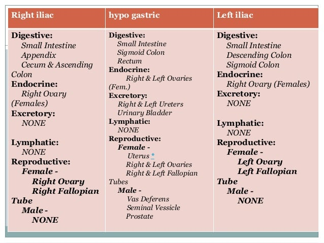 Abdominal regions anatomy