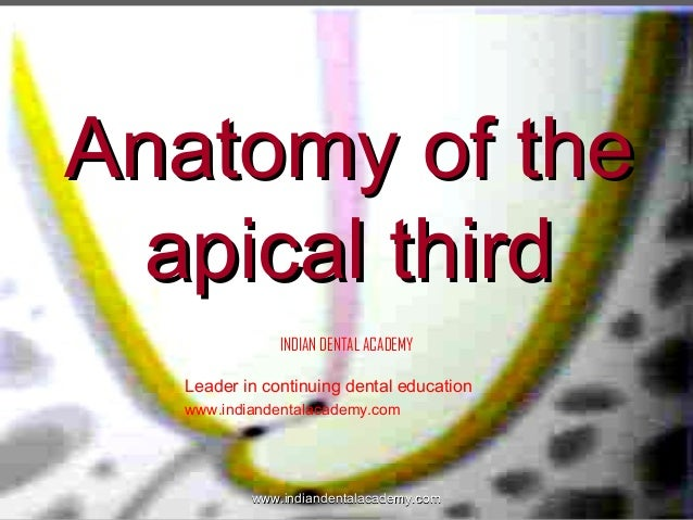 Anatomy of the apical third INDIAN DENTAL ACADEMY Leader in continuing dental education www.indiandentalacademy.com  www.i...