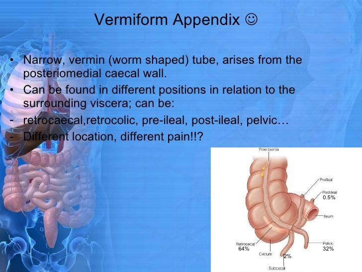 Human anatomy appendix location
