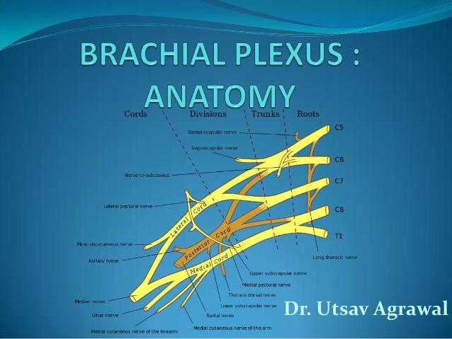 Anatomy of bachial plexus_UTSAV