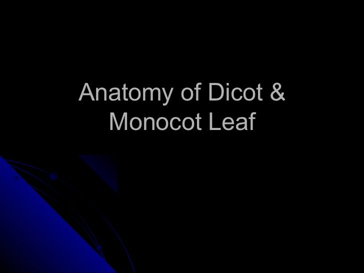Anatomy of Dicot &  Monocot Leaf