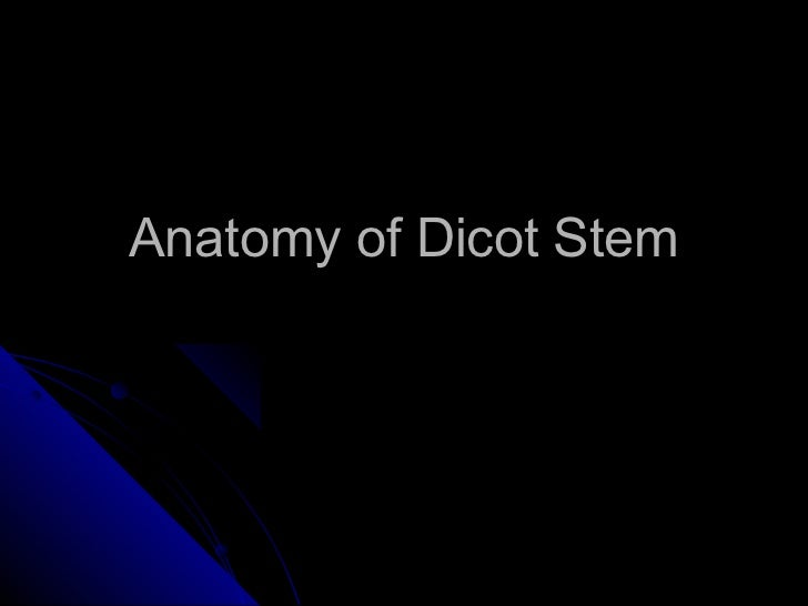 Dicot stem anatomy