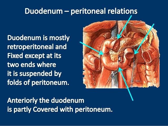 Anatomy of the duodenum