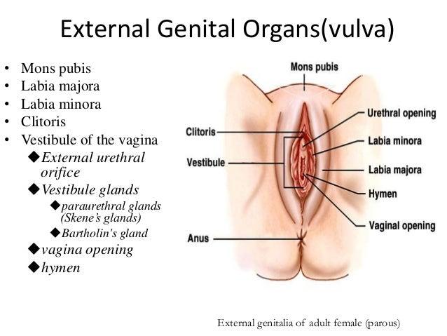 Varieties of clitoris images