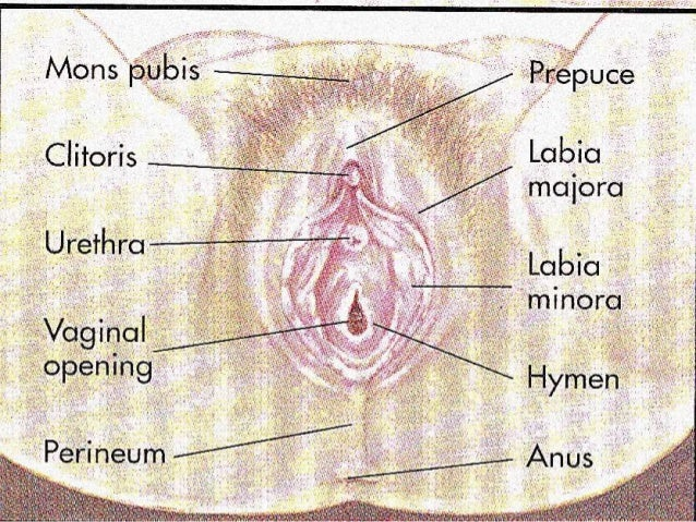 image Female reproductive tract anatomy
