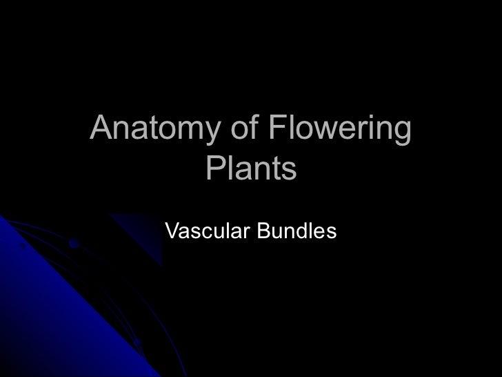 Anatomy of Flowering      Plants    Vascular Bundles