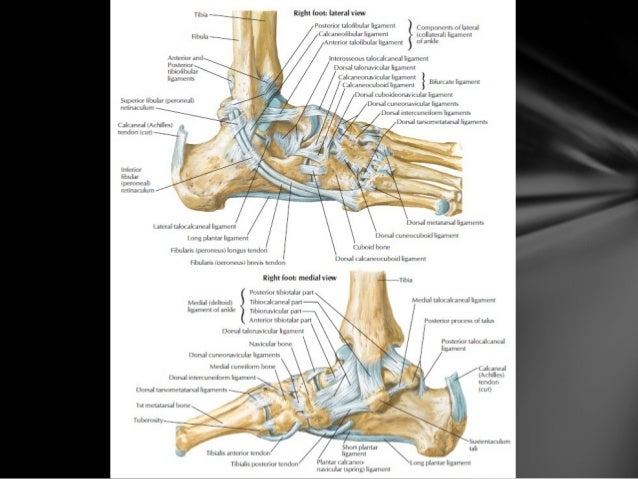 anantomy help Innerbodycom is a free virtual human anatomy website with detailed models of all human body systems the internet's best anatomy learning resource.