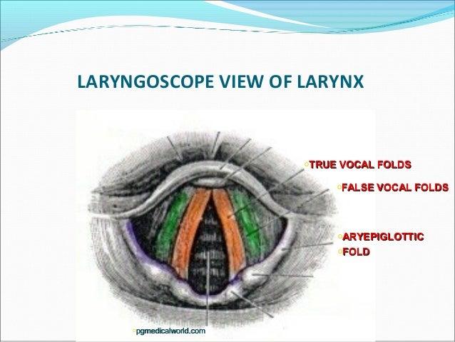 Laryngoscopic View of Larynx Laryngoscope View of Larynx