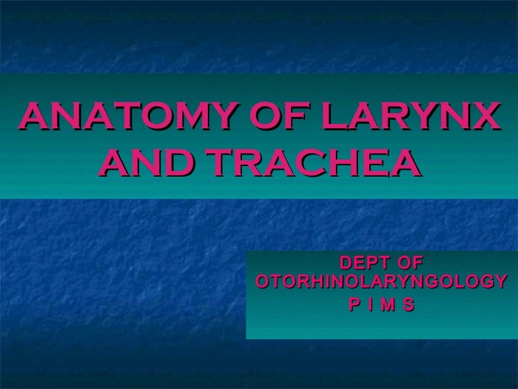 ANATOMY OF LARYNX  AND TRACHEA               DEPT OF        OTORHINOLARYNGOLOGY                P I M S