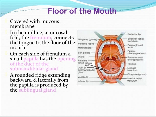 anatomy of floor of mouth collage porn video