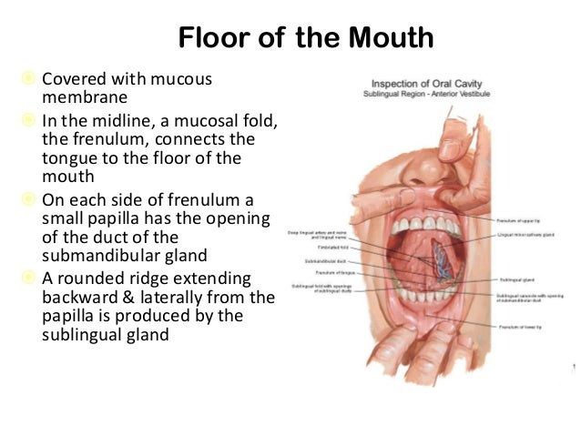 Roof mouth anatomy