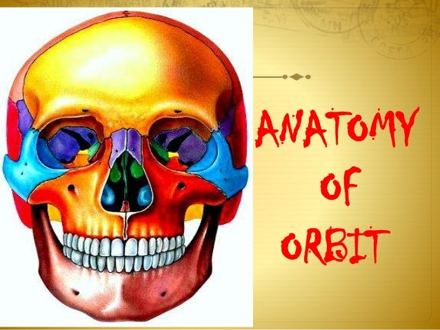 ANATOMY OF ORBIT