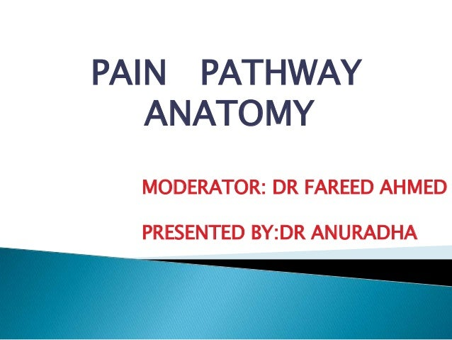 PAIN PATHWAY   ANATOMY  MODERATOR: DR FAREED AHMED  PRESENTED BY:DR ANURADHA