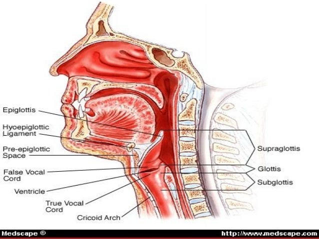 Anatomy of pharynx