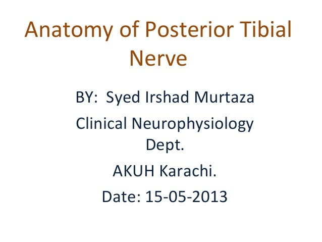 Anatomy of Posterior Tibial Nerve BY: Syed Irshad Murtaza Clinical Neurophysiology Dept. AKUH Karachi. Date: 15-05-2013