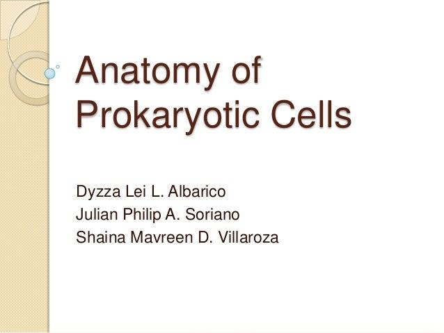 Anatomy of Prokaryotic Cells Dyzza Lei L. Albarico Julian Philip A. Soriano Shaina Mavreen D. Villaroza