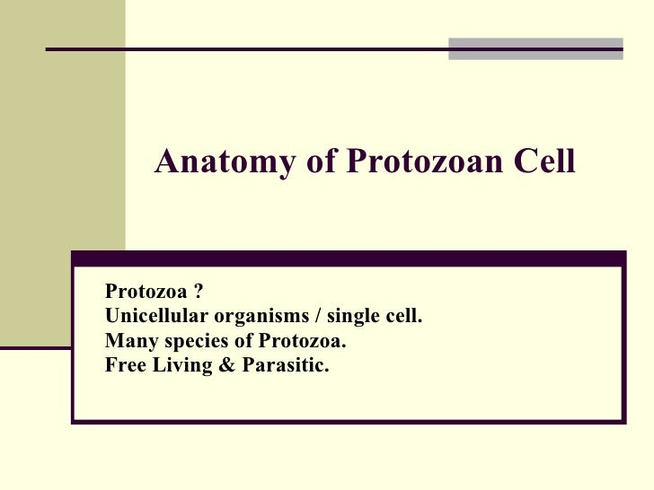 Anatomy Of Protozoan Cell