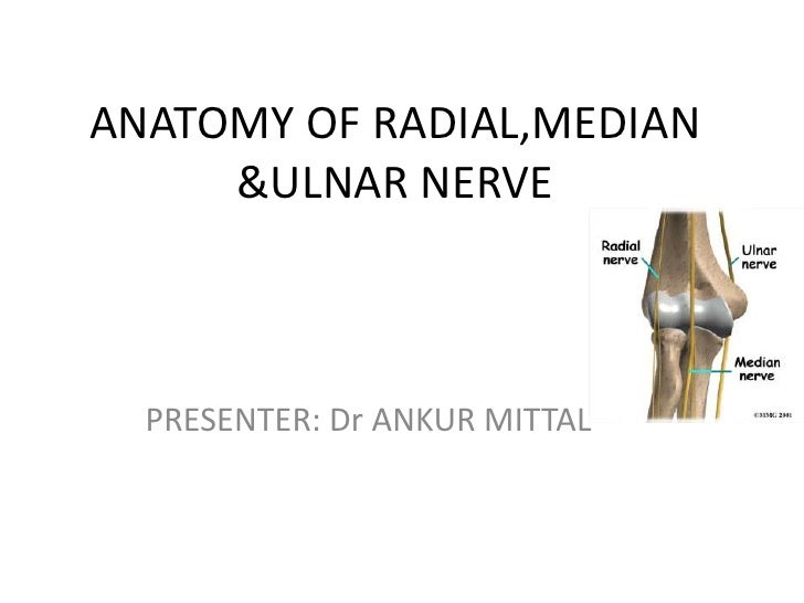ANATOMY OF RADIAL,MEDIAN     &ULNAR NERVE  PRESENTER: Dr ANKUR MITTAL