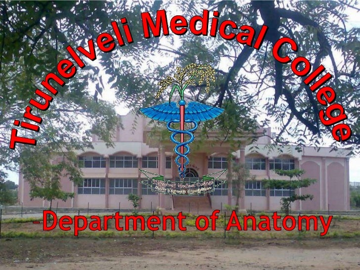 Tirunelveli Medical College<br />Department of Anatomy<br />