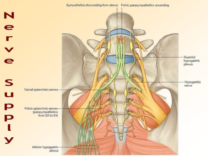Can Female anus nerve endings
