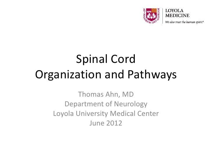 Spinal CordOrganization and Pathways          Thomas Ahn, MD      Department of Neurology   Loyola University Medical Cent...