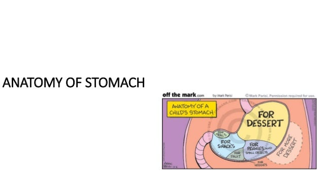 Anatomy of stomach ppt