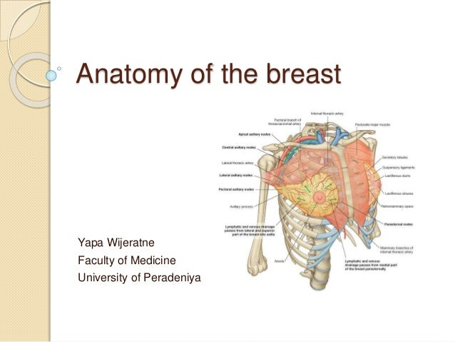 Anatomy of the breast Yapa Wijeratne Faculty of Medicine University of Peradeniya