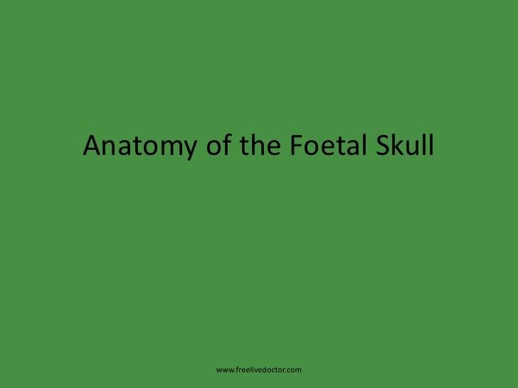 Anatomy of the Foetal Skull<br />www.freelivedoctor.com<br />
