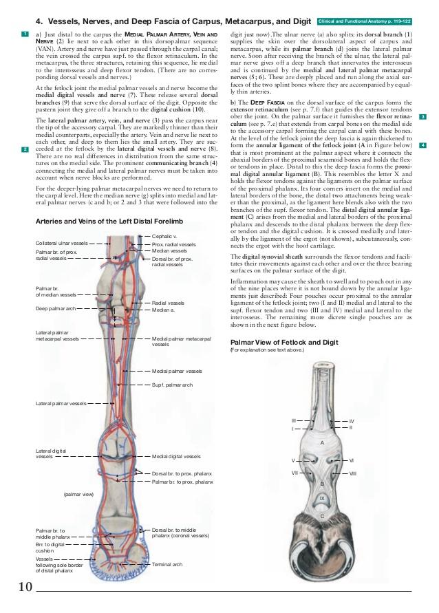 Anatomy of the horse