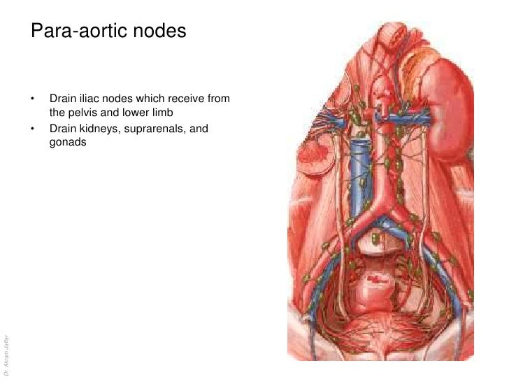 Perirectal lymph nodes anatomy