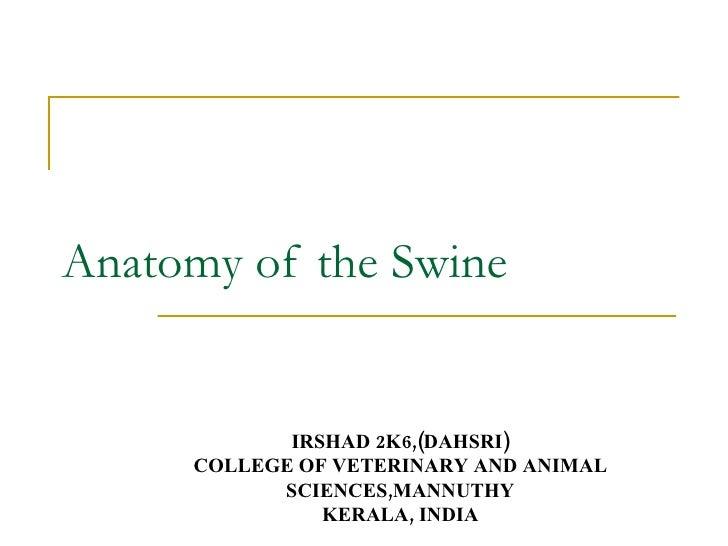 Anatomy of the Swine IRSHAD 2K6,(DAHSRI) COLLEGE OF VETERINARY AND ANIMAL SCIENCES,MANNUTHY KERALA, INDIA